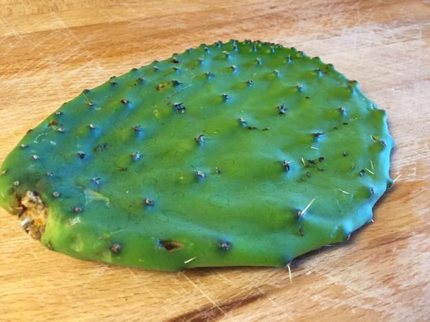 IMG_2750-cactus-paddle